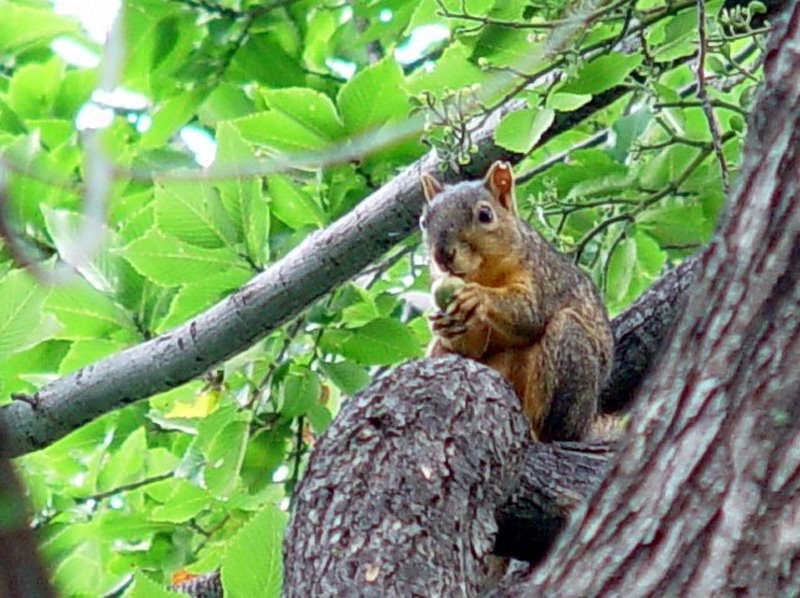 A SQUIRREL STORY TO EXPLORE CONSCIOUSNESS