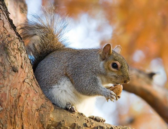 >A SQUIRREL STORY TO EXPLORE CONSCIOUSNESS