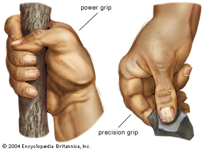 SPIRITUALITY SCIENCE - THE STATUS OF MAN IN NATURE: Human Hand has Grasping ability and it provides two kinds of Grip; 1. The Power Grip, and 2. The Precision Grip.