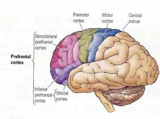 Intellectual impairment due to drugs, disease, and old age cause Speech Disorders.