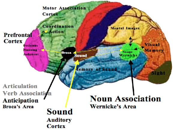 SPIRITUALITY SCIENCE - THE STATUS OF MAN: THE EVIDENCE OF PRECISION GRIP CANNOT PROVIDE CONCLUSIVE EVIDENCE OF THE PURELY HUMAN ABILITY CALLED WRITING. THE CRO-MAGNON MAN HAD APPARENTLY NOT DEVELOPED THE SPECIAL AREAS OF THE BRAIN THAT ARE IMPORTANT FOR HUMAN SPEECH AND WRITING. THE CHIEF AMONG THE BRAIN AREAS OF SPEECH IS BROCA'S AREA - BRAIN'S SPEECH CENTER.