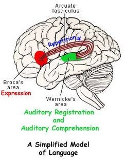 Co-ordination of sensory and motor functions is vital for normal Speech.