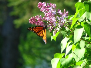 The Butterfly lives by gathering Nectar.