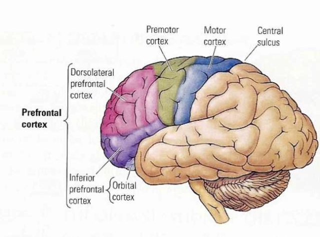 Human brain - Life is Knowledge in Action.