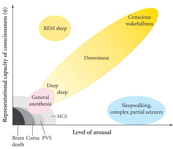 the comatose state and levels of consciousness