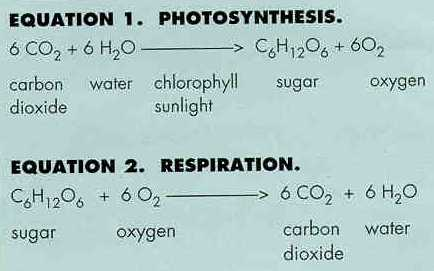 Photosynthesis And Respiration Bhavanajagat
