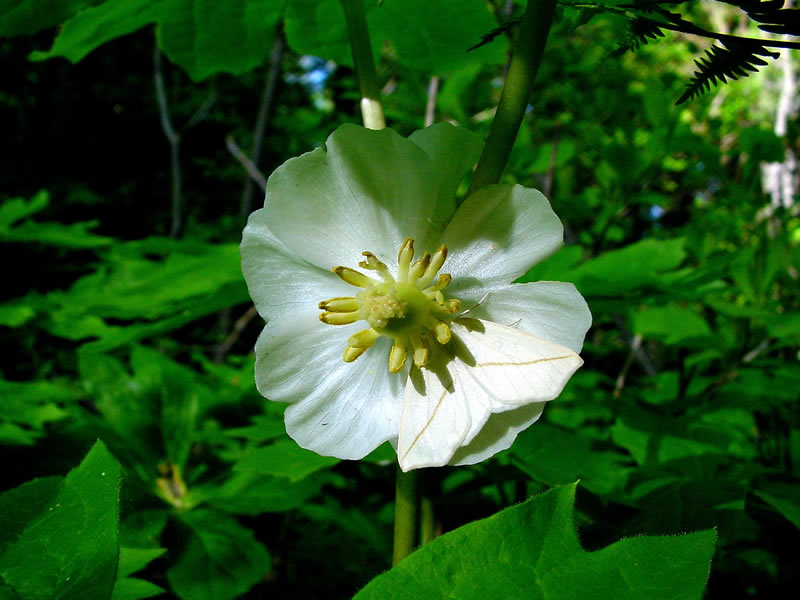 Spiritualism-The Colors of Life: What is Color? Plants that depend upon moths for pollination generally produce white or dull-colored flowers that open late afternoon or night. Moths are active at dusk or night. These white flowers produce ample nectar and carry heavy fragrance to attract the moths.
