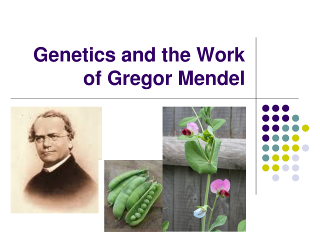 WHOLE DUDE - WHOLE COLORS: Human interest in Coloration lead Gregor Mendel to conduct his famous studies that established the science called Genetics. He conducted experiments studying the white or pinkish flowers of Pea(Pisum sativum) plants.