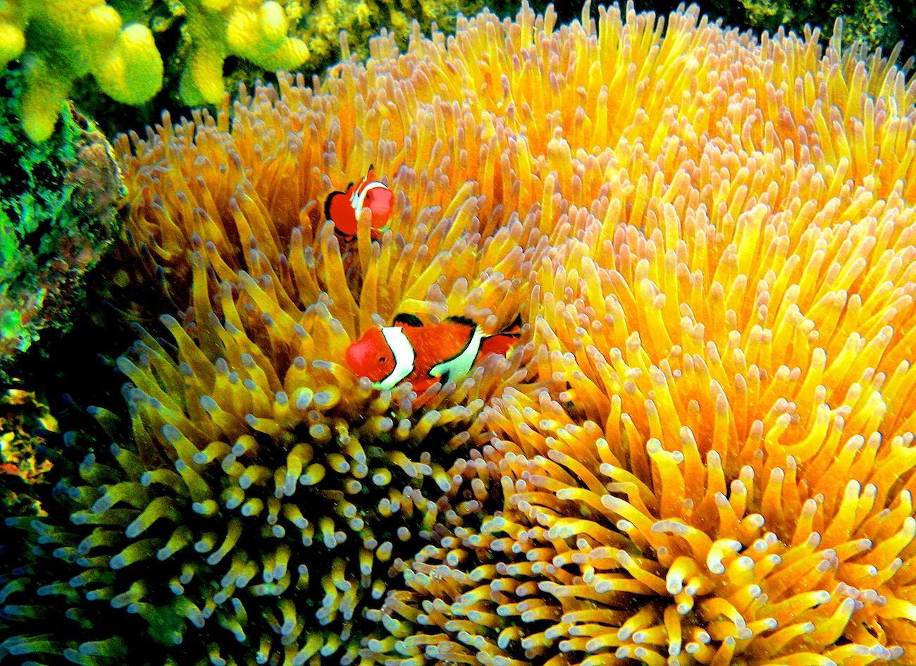 Whole Dude-Whole Colors: What is Color? Marine animals often imitate the appearance of Corals or rocks to conceal their presence.