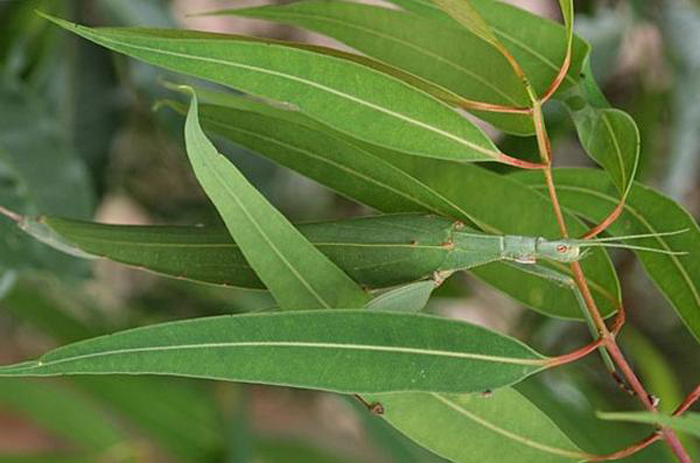 Whole Dude-Whole Colors: What is Color? The purpose of Coloration could be an adaptive mechanism and this insect very closely imitates the color and appearance of the leaves.