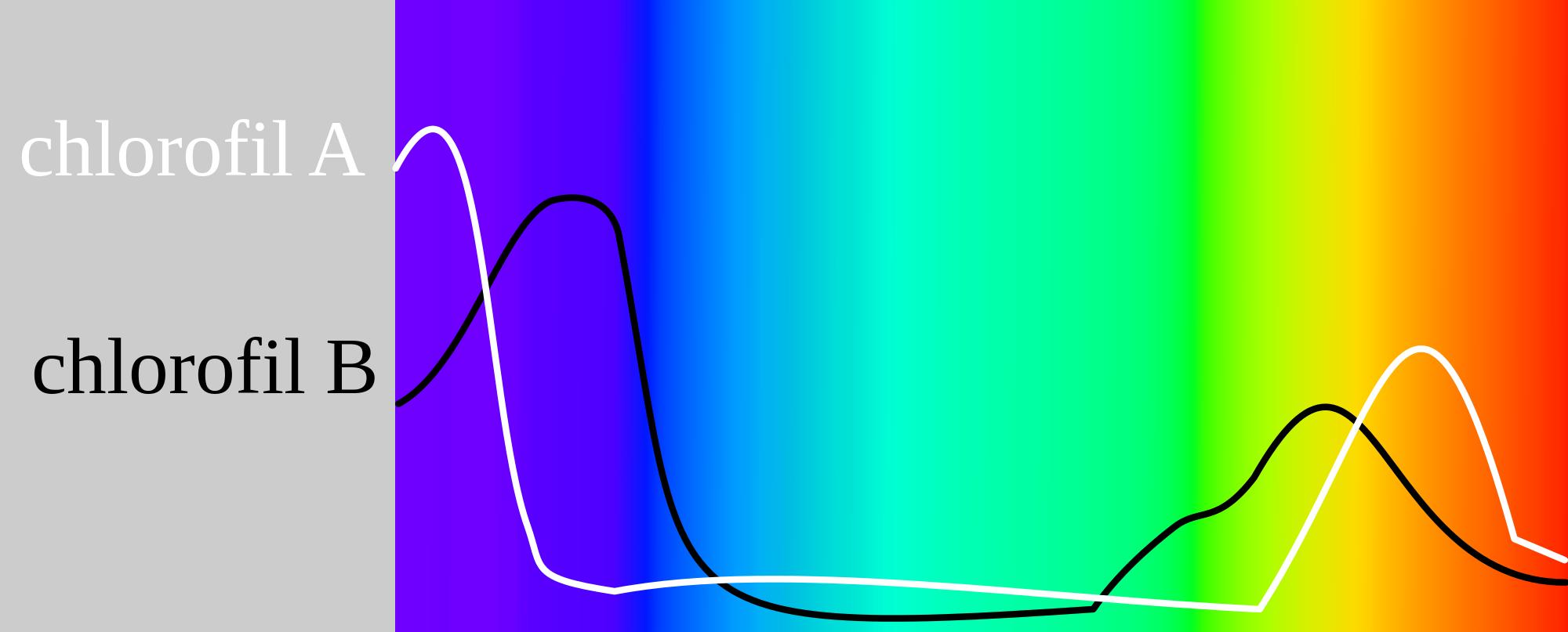 WholeDude-WholeDesigner-Chlorophyll: The light absorption spectra of Cholorophyll molecules.