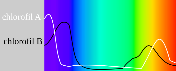 WholeDude-WholeDesigner-Chlorophyll: The light absorption spectra of Cholorophyll molecules.