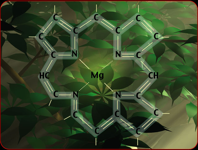 WholeDude-WholeDesigner-Chlorophyll: Chlorin ring, Tetrapyrrole Porphyrin Ring called Chlorophyll with central ion of Magnesium.