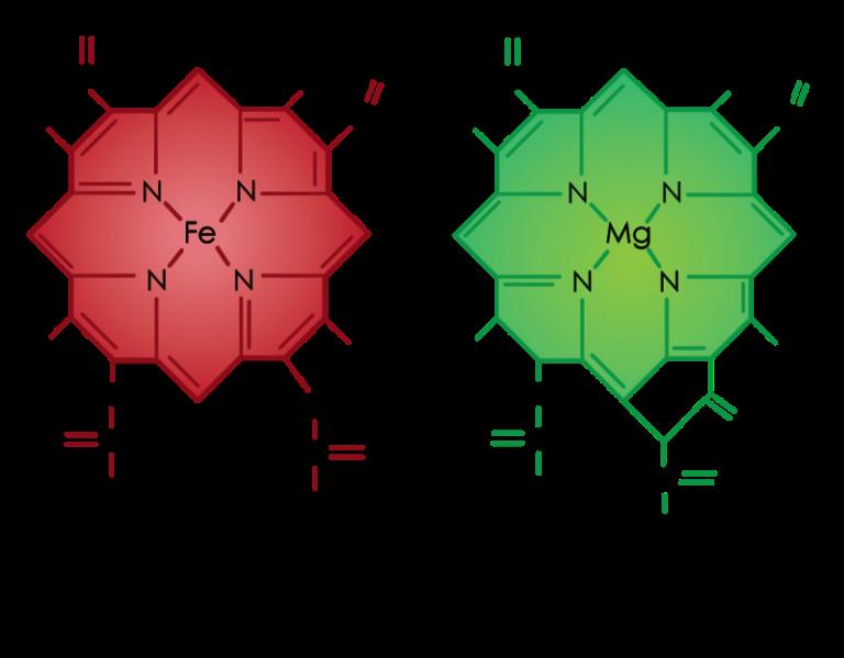 chlorophyll lab report