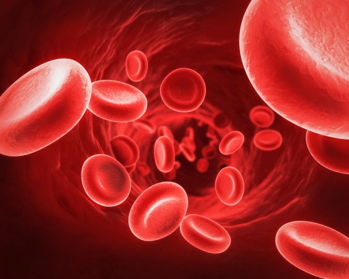 WholeDude - WholeDesigner - Red Blood Cell: Red Blood Cells are packed with hemoglobin. Each Red Cell contains over 600 million hemoglobin molecules.