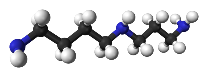 WholeDude - WholeDesigner - Phytochemistry: Spermidine is a Polyamine and it is the precursor of a polyamine called Spermine. It is associated with the smell and flavor of Semen, the thick, whitish fluid secreted by the human male reproductive organs.