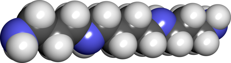 WholeDude - WholeDesigner - Phytochemistry: Spermine imparts odor to human Semen. To be odorous, a substance must be sufficiently volatile for its molecules to be given off and carried into the nostrils where the Olfactory epithelim recognizes the presence of odiferous molecules when they fit into functioning groups and specific receptors according to molecular size and shape.