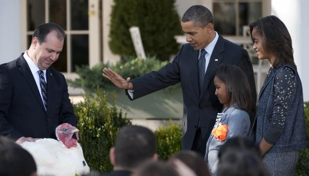 WholeDude - WholeDesigner - Whole - Thanksgiving: US President Obama graciously sanctions a Pardon that would let this Turkey to live without any fear of being used to serve as a meal in the traditional Thanksgiving Feast. This Turkey whose life is saved may have a good reason to give Thanks. This national tradition commemorates the Pilgrim's celebration of the good harvest reaped in Plymouth Colony in 1621.