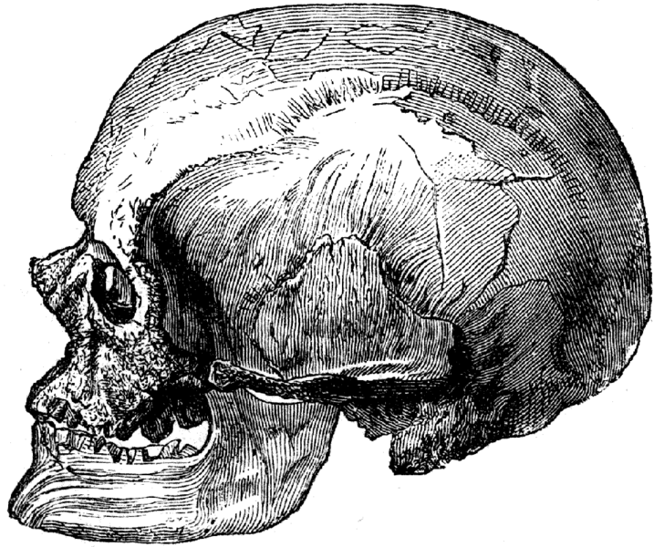 SPIRITUALITY SCIENCE - THE STATUS OF MAN: THE CRO-MAGNON MAN IS DESCRIBED AS PREHISTORIC MAN. HIS SKULL IS LARGER AND LESS ROUNDED IN SHAPE AS COMPARED TO THE SKULL OF MODERN MAN.