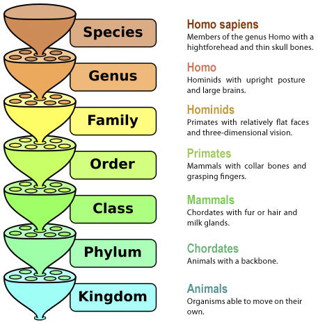 SPIRITUALITY SCIENCE - THE HUMAN SPECIES: LINNAEUS DIVIDED ORGANISMS INTO TWO KINGDOMS - 1. ANIMALIA(ANIMALS), AND 2. PLANTAE(PLANTS). THE KINGDOMS ARE DIVIDED INTO THE FOLLOWING CATEGORIES: PHYLUM OR DIVISION, CLASS, ORDER, FAMILY, GENUS, AND SPECIES.
