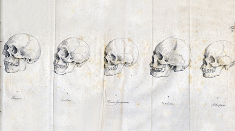 SPIRITUALITY SCIENCE - THE HUMAN SPECIES: BLUMENBACH HAD A COLLECTION OF 60 HUMAN CRANIUMS AND HE PROPOSED ONE OF THE EARLIEST CLASSIFICATIONS OF THE RACES OF MANKIND USING COMPARATIVE ANATOMY.