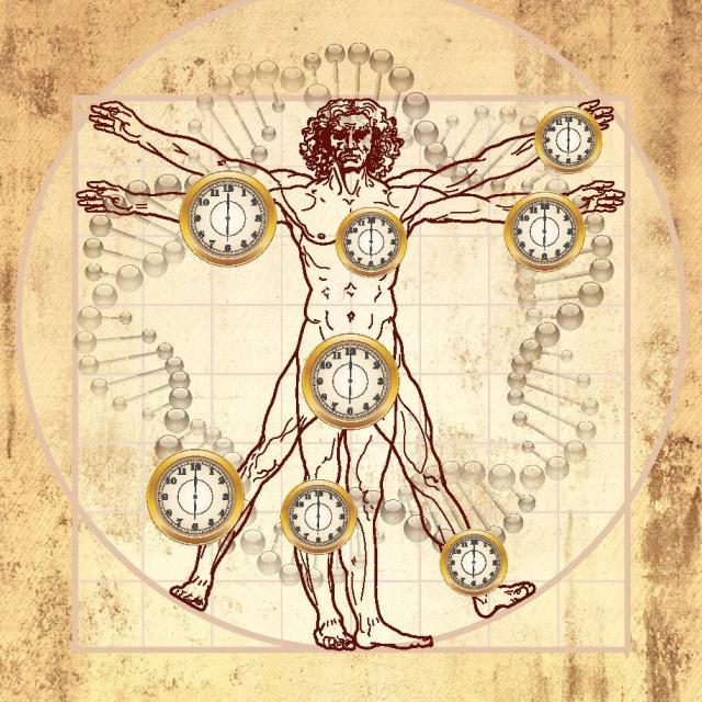SPIRITUALITY SCIENCE - THE ETERNAL LAW OF AGING: THE EPIGENETIC CLOCK, HORVATH'S CLOCK IS A BIOLOGICAL CLOCK TO MEASURE THE AGE OF MOST HUMAN TISSUES, CELL TYPES, AND ORGANS IN THE SAME INDIVIDUAL WHICH CAN HELP IN PREDICTING THE AGING PROCESS.