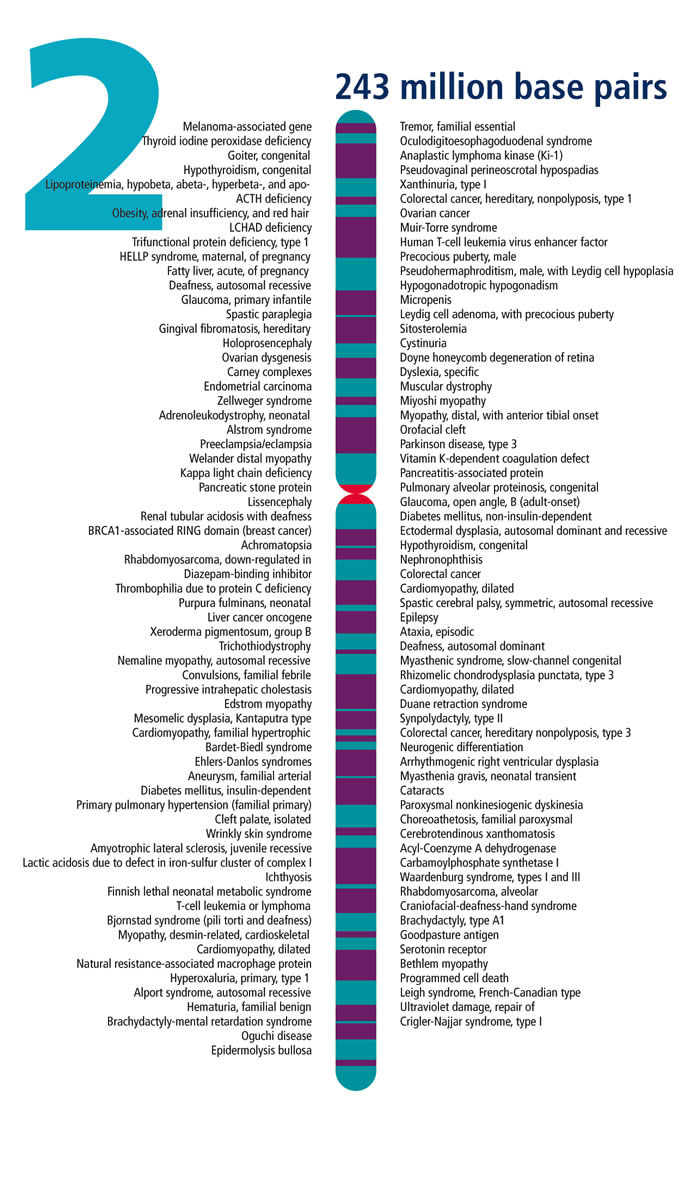 SPIRITUALITY SCIENCE - HUMAN EVOLUTION: Chromosome #2 IS THE SECOND LARGEST HUMAN CHROMOSOME. IT CONTAINS 1,491 GENES AND MILLIONS OF BASE PAIRS.