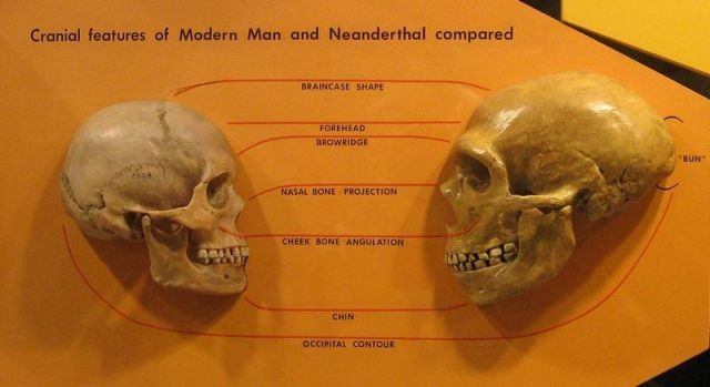 SPIRITUALITY SCIENCE - THE ORIGIN OF HUMAN SPECIES: THERE IS NO NATURAL CAUSE, NATURAL FACTOR, NATURAL CONDITION, OR NATURAL MECHANISM TO ACCOUNT FOR THE VARIATION SEEN WHEN THE NEANDERTHAL SKULL IS COMPARED WITH THE HUMAN SKULL.