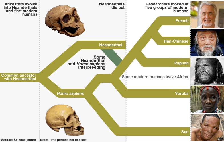 neanderthal genome project 06052010 sequence reveals how lots of us came to have neanderthal genes – but we won't be able to clone our extinct closest relatives.