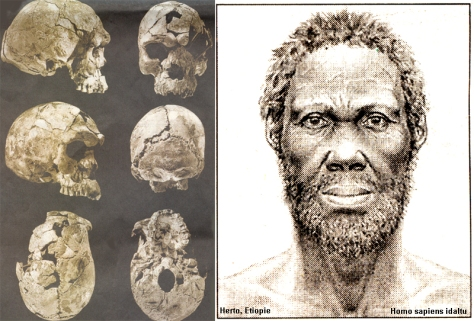 SPIRITUALITY SCIENCE - HUMAN EVOLUTION: THE IDALTU MAN WAS AT THE THRESHOLD OF MODERN HUMAN SPECIES ANATOMY BUT WAS NOT FULLY A MODERN HUMAN BEING.