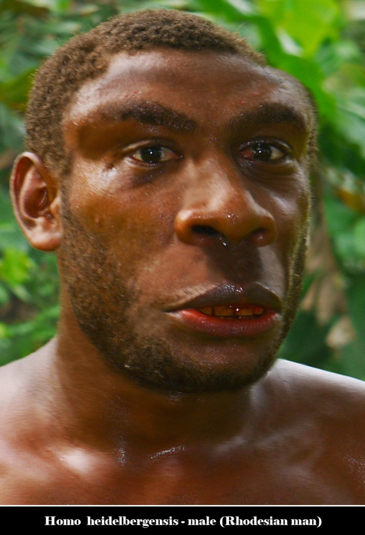SPIRITUALITY SCIENCE - THE ORIGIN OF HUMAN SPECIES: HOMO SAPIENS MAY HAVE APPEARED 300,000 YEARS AGO. THIS IS A REPLICA OF RHODESIAN MAN, HOMO SAPIENS HEIDELBERGENSIS WHO COULD BE THE SAME AS RHODESIENSIS.