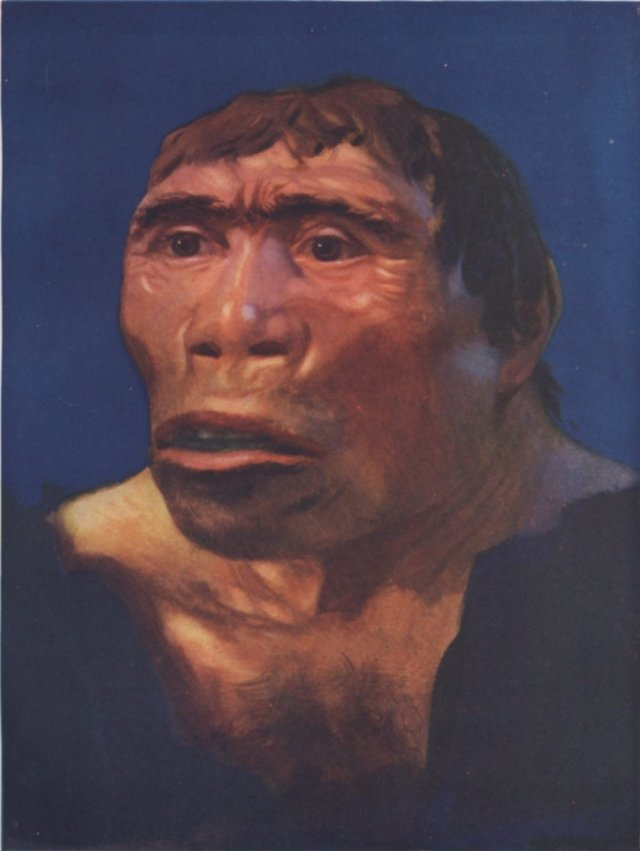 SPIRITUALITY SCIENCE - THE ORIGIN OF HUMAN SPECIES: HOMO ERECTUS, THE EARLY HOMINID SPECIES DATING FROM 1,500,000 to 300,000 YEARS AGO. THIS IS A REPLICA OF JAVA MAN, PITHECANTHROPUS ERECTUS FROM THE LOWER PLEISTOCENE.