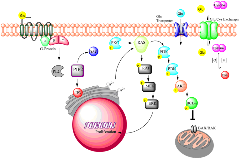 SPIRITUALITY SCIENCE - WHOLE LINGUISTICS - WHOLE LANGUAGE: AMONG ALL LIFE FORMS, THERE ARE SIMILAR SIGNAL TRANSDUCTION PATHWAYS THAT ARE USED TO COMMUNICATE INSTRUCTIONS TO CELLS USING NREVE IMPULSES OR CHEMICAL MOLECULES CALLED HORMONES. THE ABILITY OF THE CELL TO UNDERSTAND THE MESSAGE AND RESPOND WITH A PROPER SEQUENCE OF ACTIONS WHICH OFTEN INVOLVES A 'SECOND MESSENGER' IS THE BASIS FOR LIFE AND EXISTENCE.
