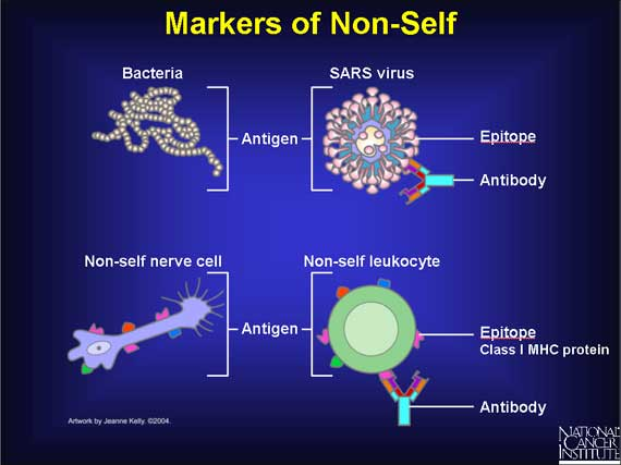 SPIRITUALITY SCIENCE - THE ART OF KNOWING : AT A FUNDAMENTAL LEVEL, LIFE AND LIVING IS ABOUT KNOWING MATTER AS SELF OR NON-SELF. THIS IDENTIFICATION OF MATTER INVOLVES THE ABILITY TO RECOGNIZE MOLECULES OF MATTER . TO LEARN THE ART OF KNOWING, MAN HAS TO KNOW ABOUT THE MOLECULAR BASIS FOR EXISTENCE.
