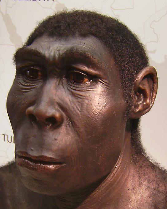 Mendel's Laws-Human Evolution-Homo erectus