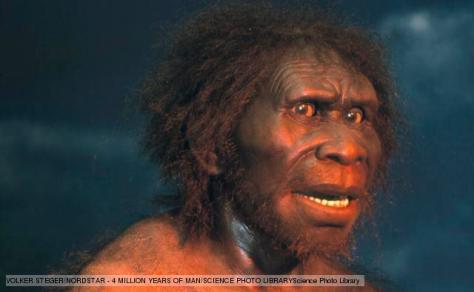 MENDEL'S  LAWS  OF  INHERITANCE  VS  HUMAN  EVOLUTION : REPLICA  OF  HOMO  ERECTUS(AFRICA), ERECT  MAN,  VERTICAL  GAIT,  LIVED  ABOUT 1.8  TO  0.3  MILLION  YEARS  AGO .
