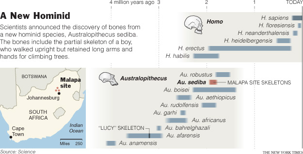 A NEW HOMINID SPECIES DISCOVERED IN SOUTH AFRICA. THE PLACE OF AUSTRALOPITHECUS SEDIBA IN TIME.