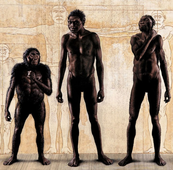 THE DISCOVERY OF HOMO NALEDI. COMPARISON WITH OTHER SPECIES. 1. LUCY: Australopithecus afarensis, lived 3.2 million years ago, adult female, height 3 ft 8 in, weight 60-65 Lbs; TURKANA BOY: Homo erectus, lived 1.6 million years ago, adolescent male, height 5 ft, weight 110 - 115 Lbs; Homo naledi:Rising Star Hominin, male adult, height 4 ft 10 in, weight 100 - 110 Lbs.