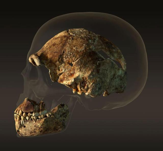 THE DISCOVERY OF HOMO NALEDI - RISING STAR CAVE HOMININ IN SOUTH AFRICA. A COMPARISON OF HOMININ CRANIUM WITH THAT OF ANATOMICALLY MODERN HUMAN SKULL EXPLAINS THE DISBELIEF IN THEORY OF EVOLUTION.