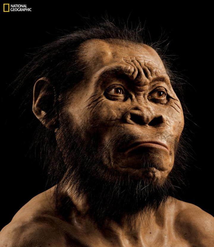 "This March 2015 photo provided by National Geographic from their October 2015 issue shows a reconstruction of Homo naledi's face by paleoartist John Gurche at his studio in Trumansburg, N.Y. In an announcement made Thursday, Sept. 10, 2015, scientists say fossils found deep in a South African cave revealed the new member of the human family tree. (Mark Thiessen/National Geographic via AP) IMAGE MUST INCLUDE NATIONAL GEOGRAPHIC LOGO; CROPPING NOT PERMITTED; MANDATORY CREDIT: ""MARK THIESSEN/NATIONAL GEOGRAPHIC"""
