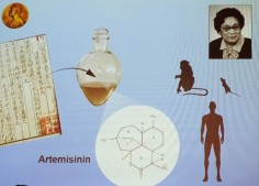 What is Intelligence? Man Vs Parasite.Biotic Interactions, Spiritual vs Parasitic. Artemisinin. Is the Battle decided?