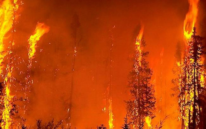 TAT ASMI PRABHU - FIFTH MAHAVAKYA - ANIMATE VS INANIMATE DUALISM. A FOREST FIRE GENERATES LIGHT AND HEAT, BUT IT LACKS THE PURPOSIVENESS OF FIRE LIT BY MAN.
