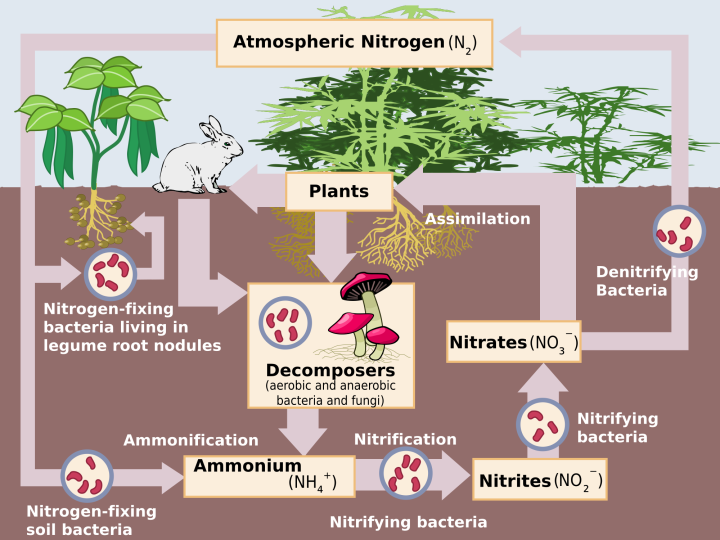 TAT ASMI PRABHU - FIFTH MAHAVAKYA - ANIMATE VS INANIMATE DUALISM. NITROGEN CYCLE INVOLVES CYCLICAL EXCHANGE OF MATTER BETWEEN INANIMATE AND ANIMATE.