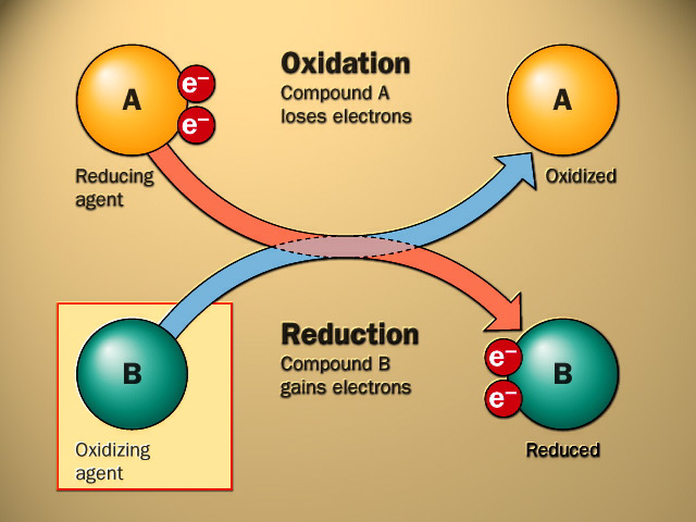 TAT ASMI PRABHU - FIFTH MAHAVAKYA - ANIMATE VS INANIMATE DUALISM. BOTH LIVING AND NONLIVING CAN PERFORM OXIDATION-REDUCTION CHEMICAL REACTIONS. THE LIVING USE THIS REACTION WITH PURPOSIVENESS.