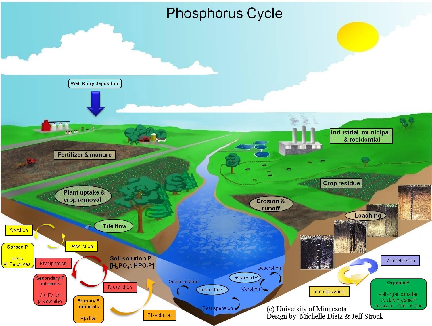 TAT ASMI PRABHU - FIFTH MAHAVAKYA - ANIMATE VS INANIMATE DUALISM. PHOSPHORUS CYCLE DESCRIBES CYCLICAL FLOW OF CHEMICAL MOLECULES FROM INANIMATE TO ANIMATE.