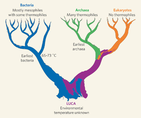 SPIRITUALITY SCIENCE - CONCEPT OF LAST UNIVERSAL COMMON ANCESTOR (LUCA).