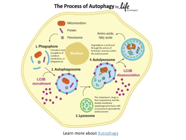 life and death knowledge in action autophagy