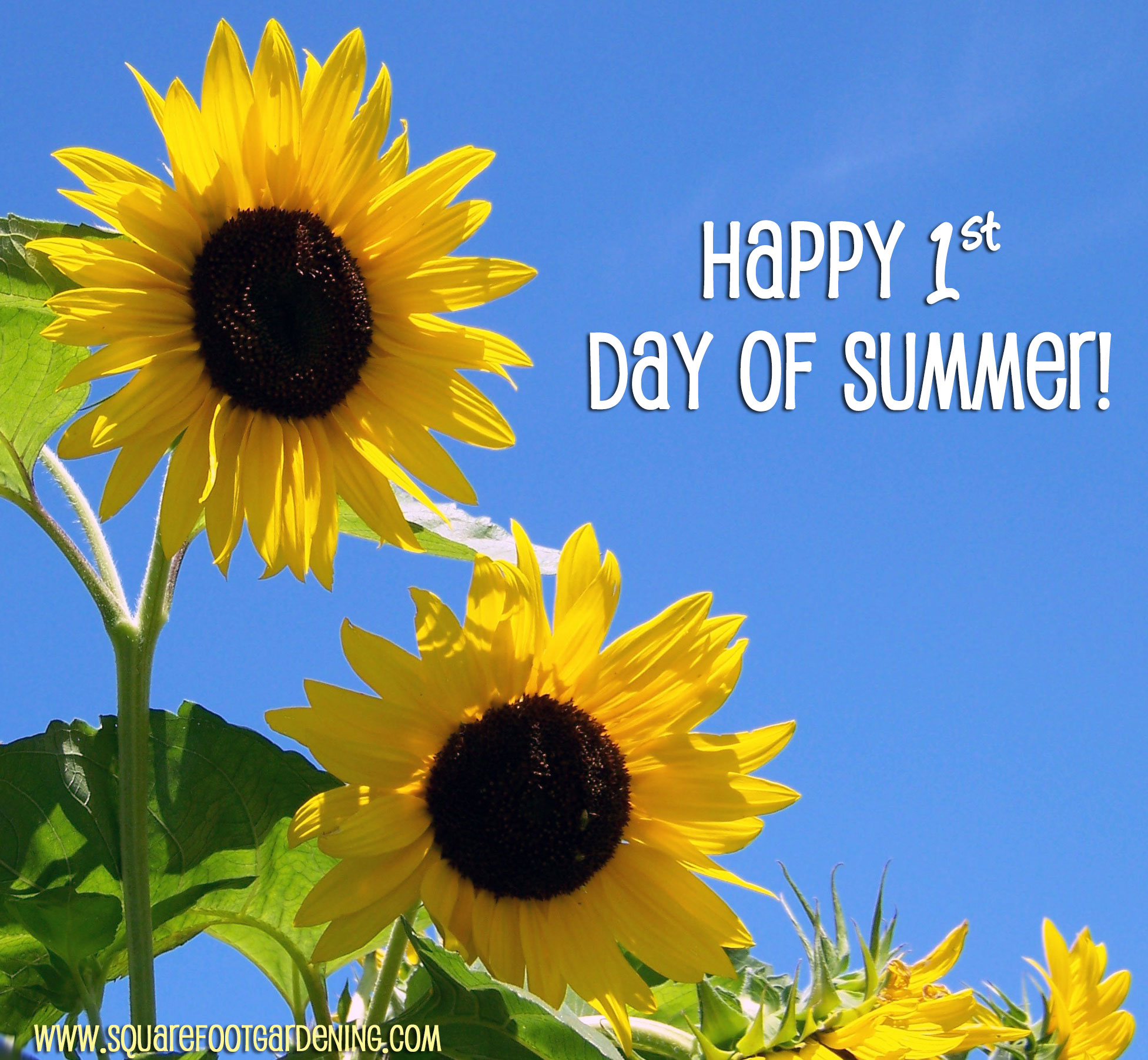 Image result for 1st day of summer